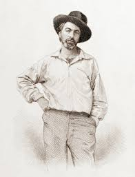 comparison and contrast of emily dickinson and walt whitman  walt whitman