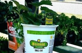 home depot garden soil 2 strawberry plants for home depot garden soil home depot home