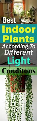 best indoor plants for office. Best-indoor-plants-according-to-different-light-conditions2- Best Indoor Plants For Office