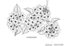 花 あじさい イラスト 白黒の写真素材 Pixta