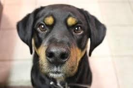aliment pour chien constipé