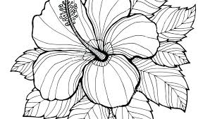 printable hibiscus coloring pages flower for s realistic flowers free printable hibiscus coloring pages flower for s realistic flowers free
