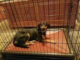 dog crate bed customer reviews beds uk dog crate bed