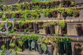 the best plants for vertical vegetable gardens