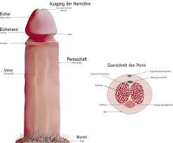 Mein penis bleibt nicht steif