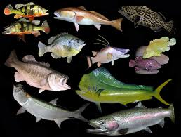 welcome to anglers choice fish mounts