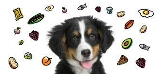Mπορεί ο σκύλος να καταναλώνει δημητριακά;