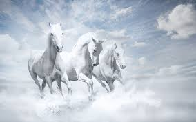 white horses.  Horses Whitehorseshd And White Horses