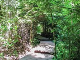 Pacific Spirit Regional Park hiking and walking trails near Vancouver |  Vancouver Trails