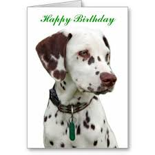 hello this is dog happy birthday. \u003e\u003e\u003ehello dalmatian puppy happy birthday greeting card hello this is dog r