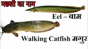 Hindi Birds Name Chart 50 Fish Names In English And Hindi
