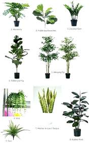 great office plants. Best Plants For Office Good Great Cubicle The T