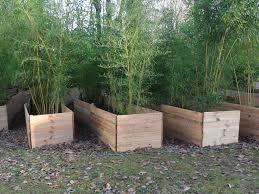 Planter Des Bambous En Hiver Pivoine Etc