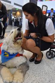 Therapy pets helping anxious, fearful travelers relax | Life ...