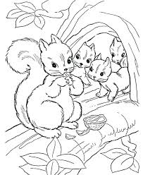Flying Squirrel Coloring Page Wikipharminfo