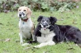 Husher Elastic Training Muzzle For Dogs