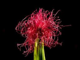 Resultado de imagen para flores y sus efectos