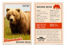 Dakota Grizzly Size Chart Bears Of The Last Frontier Brown Bear Fact Sheet Nature