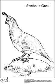 Quail Coloring Page Image Clipart Images - grig3.org