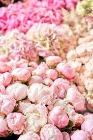 Floral Carpet Or Wallpaper. Background ...