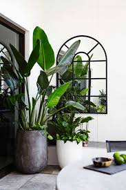Robinson Design Style Tip Tree Potting Plants Indoor Plants Balcony Garden