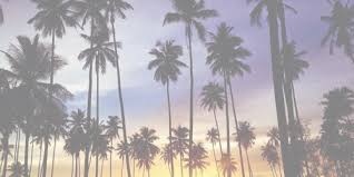 palm trees tumblr. Palm Trees Tumblr - Google Search