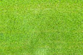 grass.  Grass Top View Of Green Grass Background Texture Free Photo Intended Grass