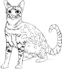 Coloriage Chat Coloriages De Chats Coloriages Enfants Biboon
