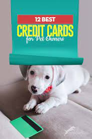 Check spelling or type a new query. The 12 Best Credit Cards For Pet Owners