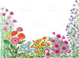 Small Picture Flower Border Clip Art Vector Images Illustrations iStock