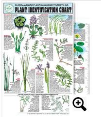 Freshwater Aquatic Plant Identification Chart 12 Contains