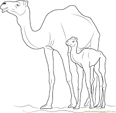 Small Picture Camel with Kid Coloring Page Free Camel Coloring Pages