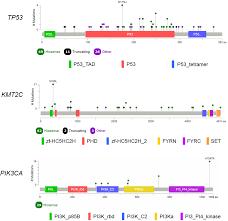 Tumor Mutational Profile Of Triple Negative Breast Cancer