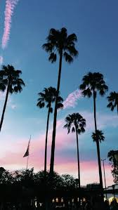 palm trees sunset tumblr. Palm Tree Sunset Blue Ocean Clouds Free Desktop Background Best Of Photography Tumblr Wallpaper Pesquisa Trees