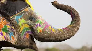 Colorful, Elephant, Holi HD Wallpaper ...