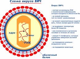 ВИЧ инфекция СПИД синдром приобретенного иммунодефицита  СПИД синдром приобретенного иммунодефицита аллергия на все и спид