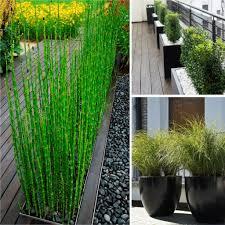 privacy plants planters trex furniture