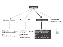 Flowchart Showing The Different Ways Of Tissue Processing In