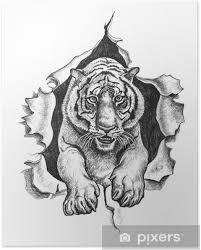 Poster Disegno A Matita Di Una Tigre Pixers Viviamo Per Il