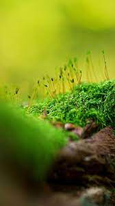 Hd Wallpaper Nature For Android ...