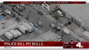 pitbull dog attack. Simple Pitbull LA Officers Shoot 3 Pit Bulls After Attack On Pitbull Dog O