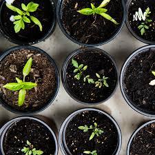 Gardening Talks   Gardening Gup Shup 