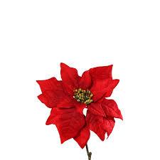 Weihnachtsstern Velvet