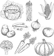 farm vegetables engraving stylized sketches for old fashioned recipe book or agriculture harvest design with tomato and onion cabbage and carrot