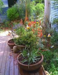 Small Picture Understorey Garden Design