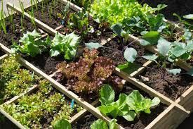 grow a successful vegetable garden