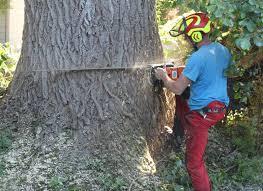 Afbeeldingsresultaat voor bomen kappen
