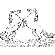 Paarden Kleurplaten Printen Hard Kleurplaten Paarden En Veulens