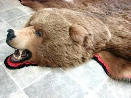 real bear stories polar skin rug life fur rugs mounted taxidermy grizzly and real bear skin rug