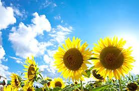 「夏」の画像検索結果